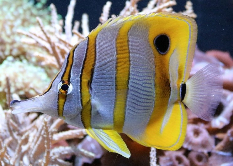 photo of an angelfish by Linda Hallifax